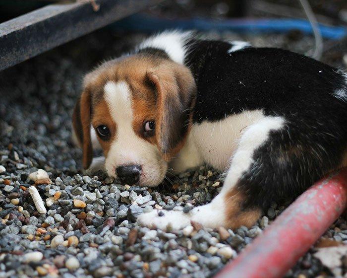 Cercasi casa per cuccioli di cane appena nati il nuovo for Recinti per cuccioli di cane in casa