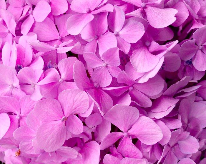Fiori Maggio.Mogliano Tradizionale Festa Dei Fiori L 11 12 13 Maggio